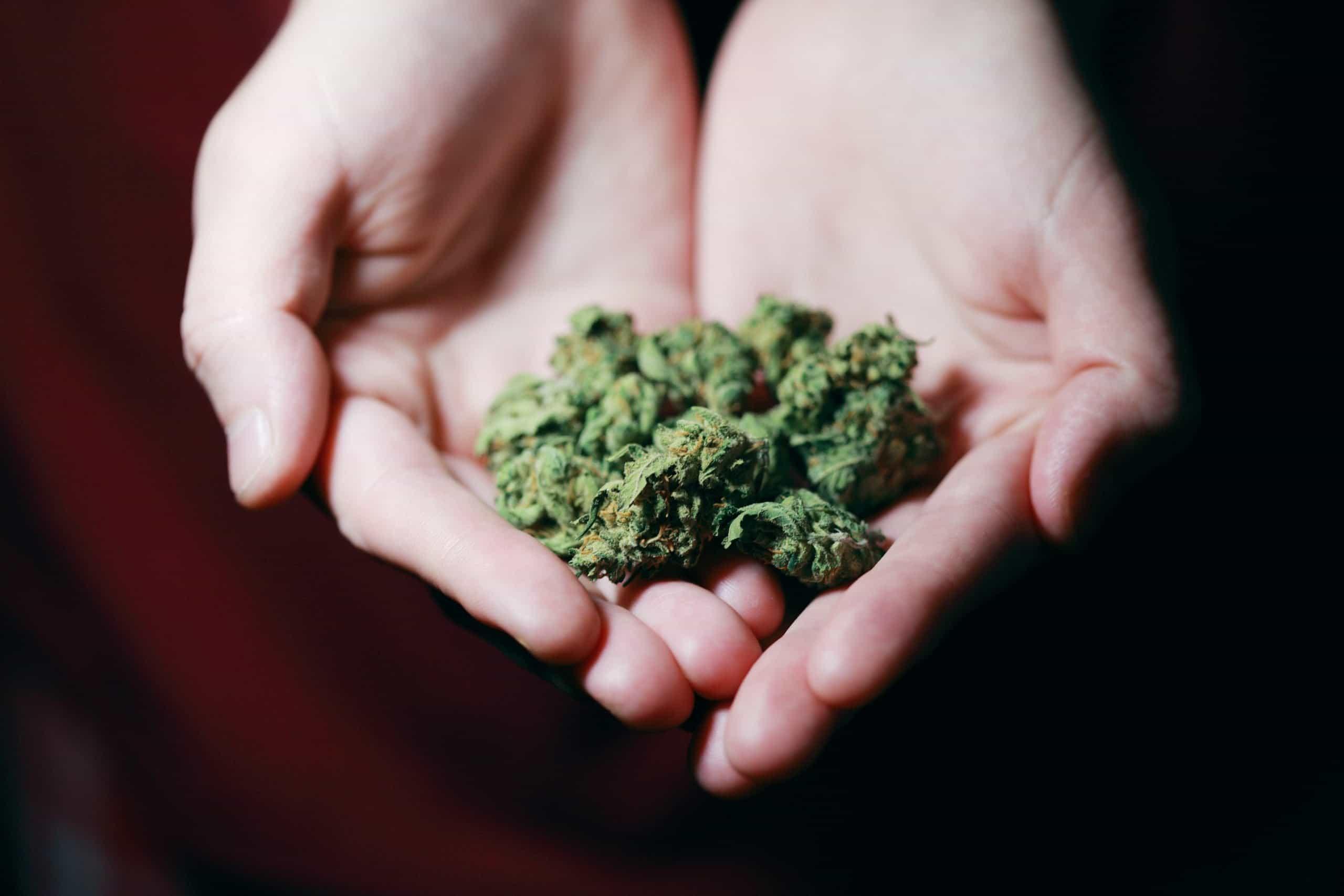 Cannabis SEO Expert Agency
